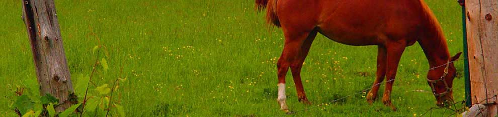 farm horse grazing